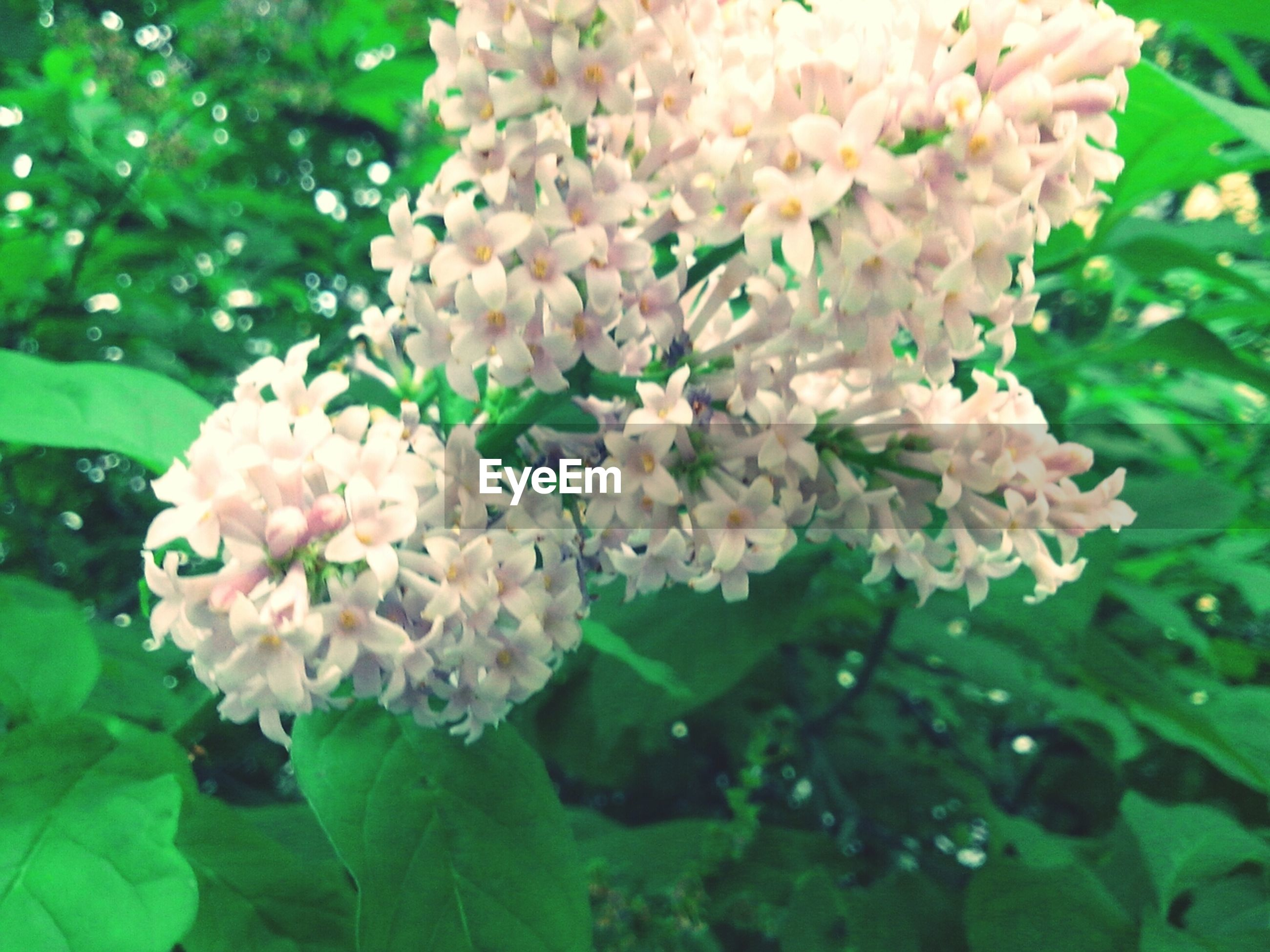 flower, freshness, fragility, petal, growth, flower head, beauty in nature, blooming, white color, leaf, nature, plant, close-up, high angle view, in bloom, green color, park - man made space, blossom, focus on foreground, outdoors