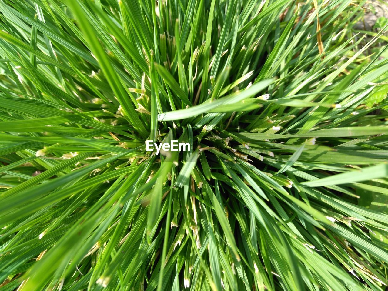 green color, growth, full frame, backgrounds, plant, beauty in nature, no people, close-up, nature, day, leaf, plant part, outdoors, tree, freshness, tranquility, green, natural pattern, needle - plant part, pine tree, spiky, coniferous tree