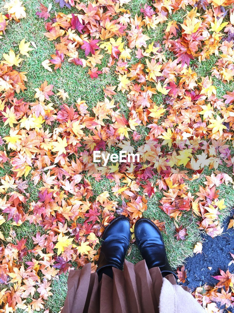 Low Section Of Woman Standing By Fallen Maple Leaves On Field During Autumn