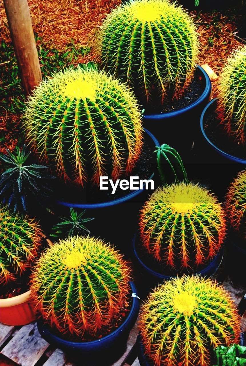 cactus, succulent plant, green color, thorn, barrel cactus, growth, potted plant, plant, spiked, beauty in nature, high angle view, no people, sharp, nature, close-up, day, natural pattern, field, sign, warning sign, outdoors, spiky, plant nursery, houseplant