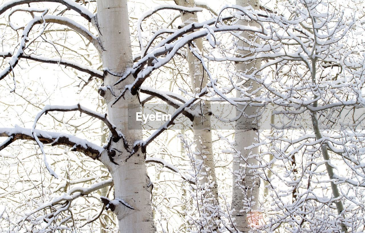 Close-Up Of Snow Covered Trees Against Clear Sky