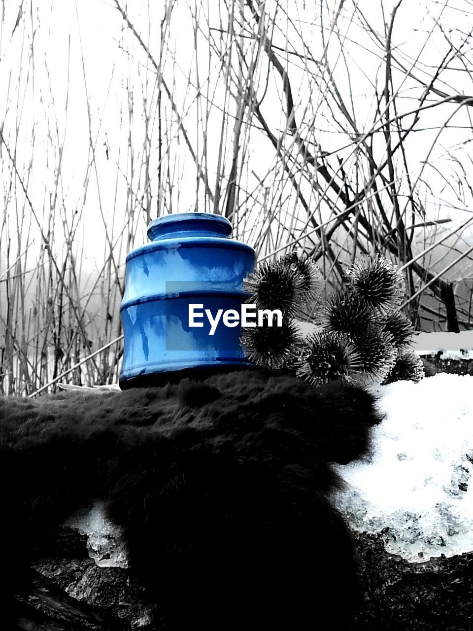 Digitally manipulated image of blue vase and dry thistle in winter