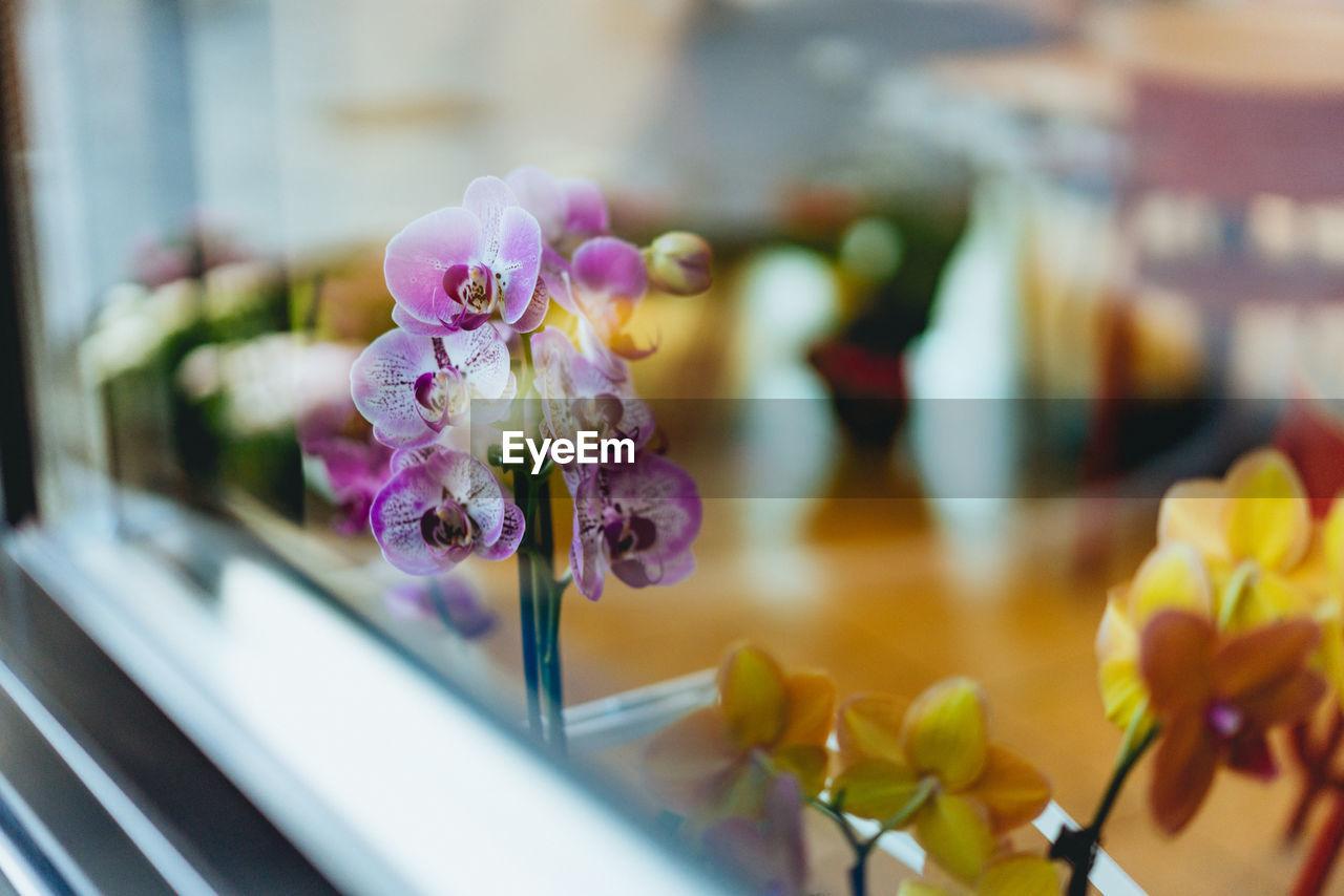 Close-Up Of Purple Iris Flowers Seen Through Window