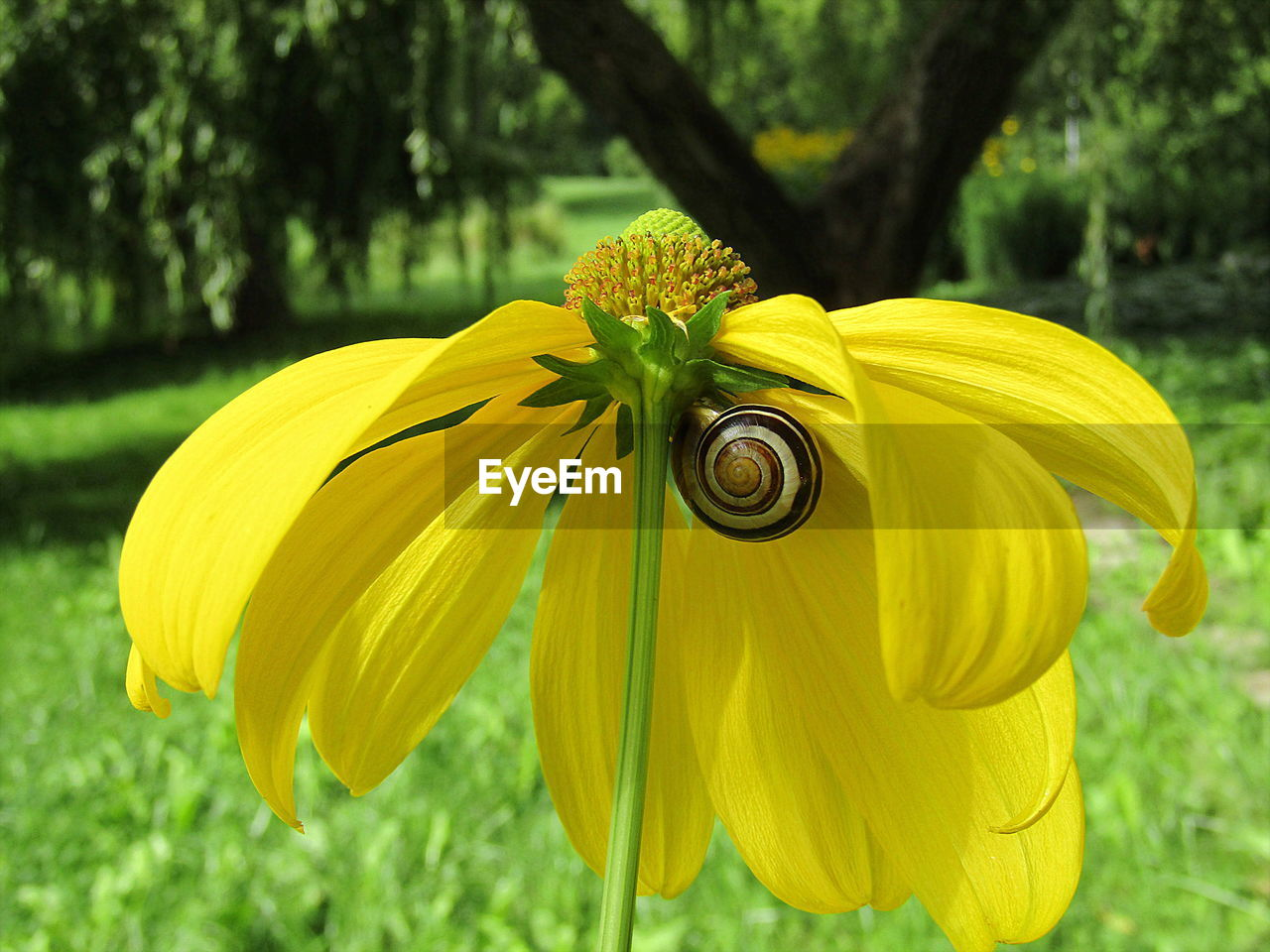 yellow, flower, fragility, focus on foreground, nature, petal, day, growth, outdoors, no people, beauty in nature, close-up, flower head, freshness, one animal, plant, animal themes, tree, blooming, grass