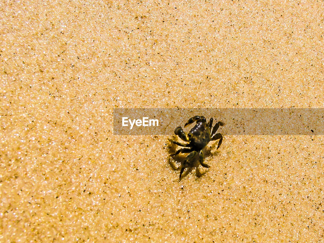 beach, sand, animal themes, animals in the wild, one animal, no people, nature, day, outdoors, animal wildlife, hermit crab, close-up
