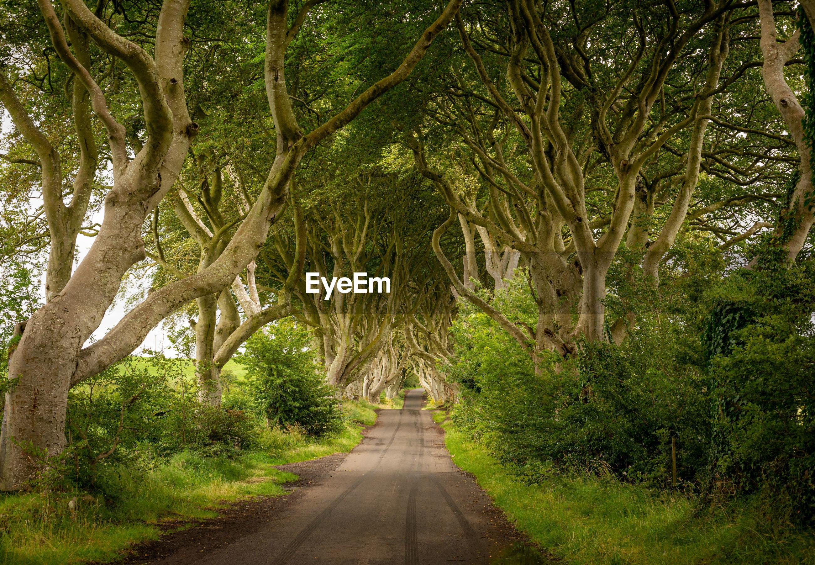 ROAD AMIDST TREES