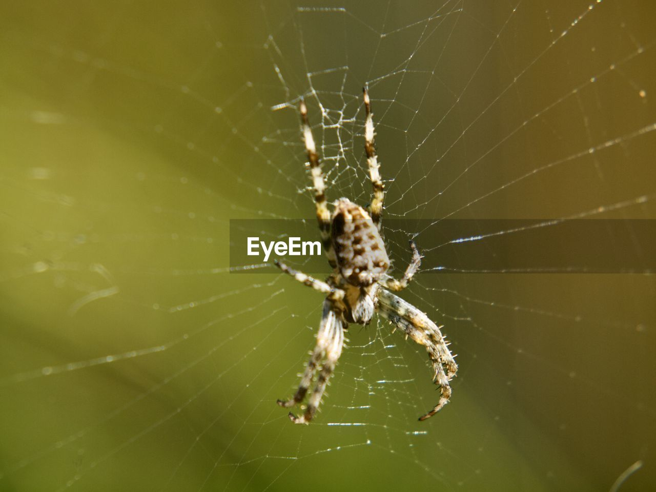 arachnid, spider web, spider, animal themes, invertebrate, arthropod, animals in the wild, one animal, animal, close-up, animal wildlife, insect, fragility, focus on foreground, vulnerability, survival, zoology, no people, day, nature, web, outdoors, animal leg, complexity