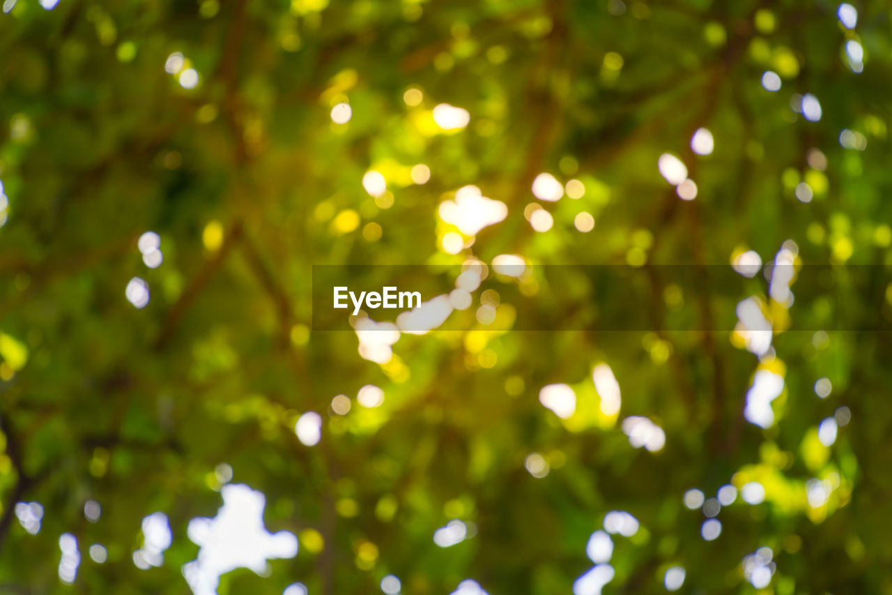 green color, no people, defocused, tree, nature, outdoors, day, growth, illuminated, beauty in nature, close-up
