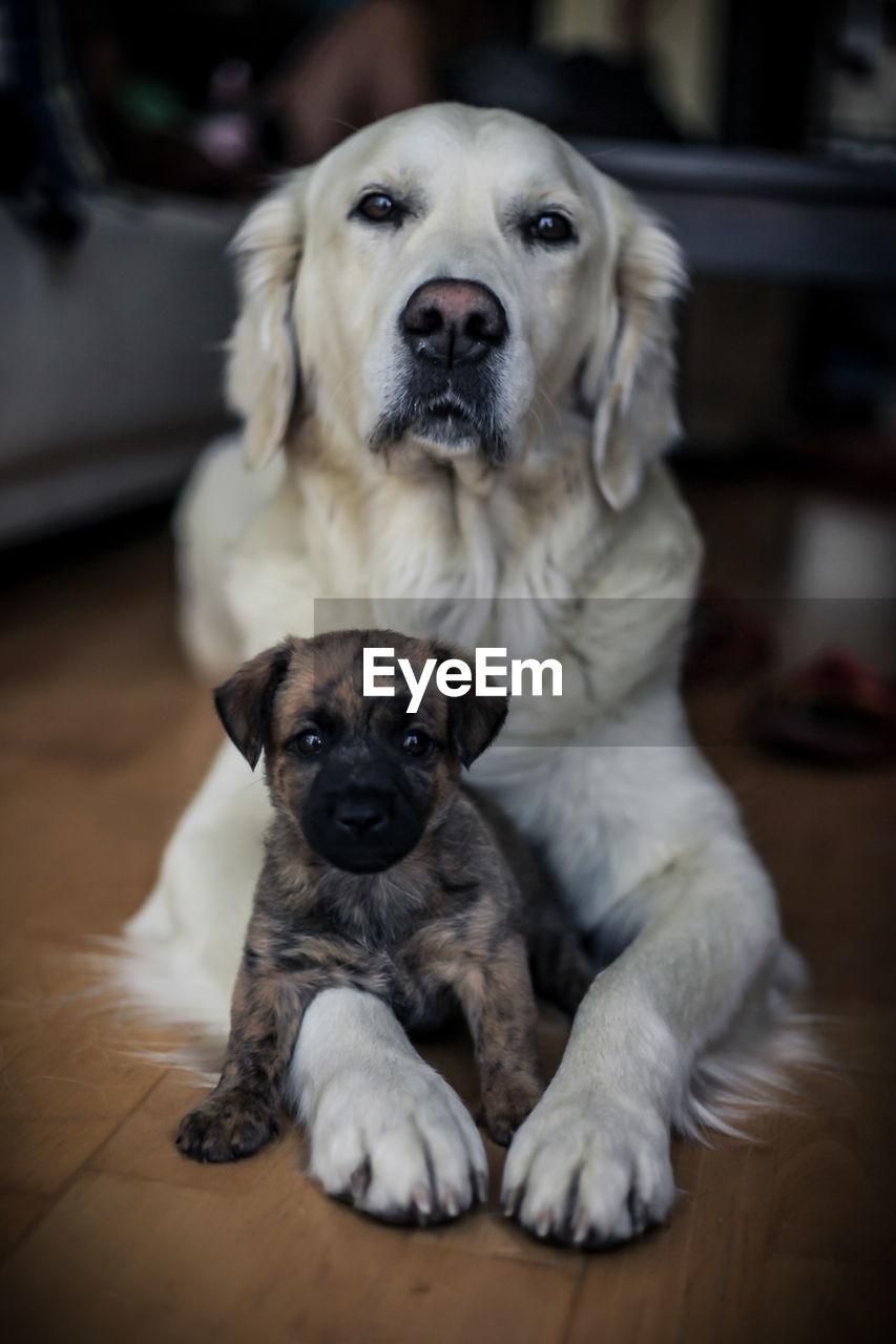 Close-Up Portrait Of Puppy Sitting