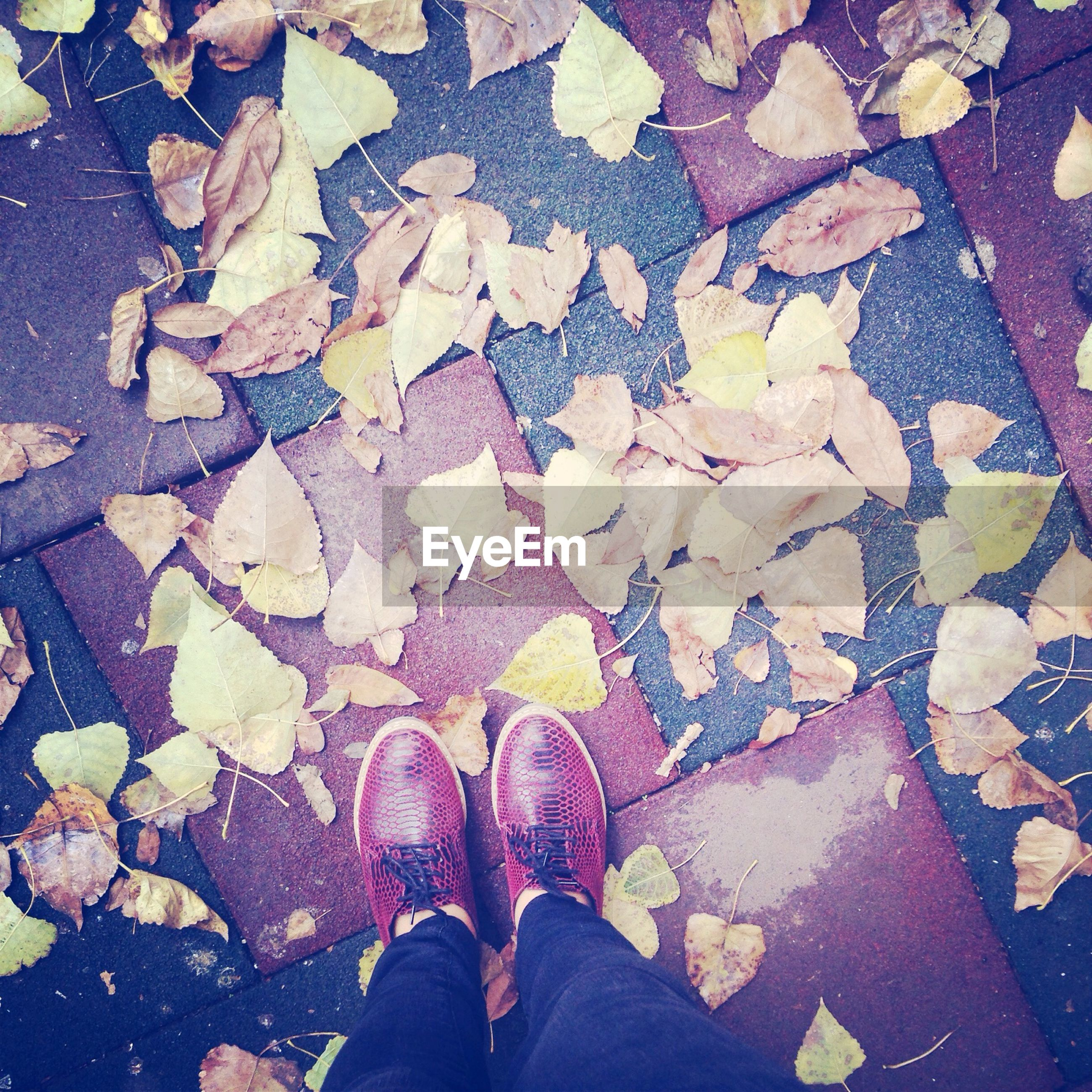 low section, person, shoe, personal perspective, standing, high angle view, human foot, lifestyles, footwear, unrecognizable person, leaf, street, men, autumn, directly above, leisure activity, cobblestone