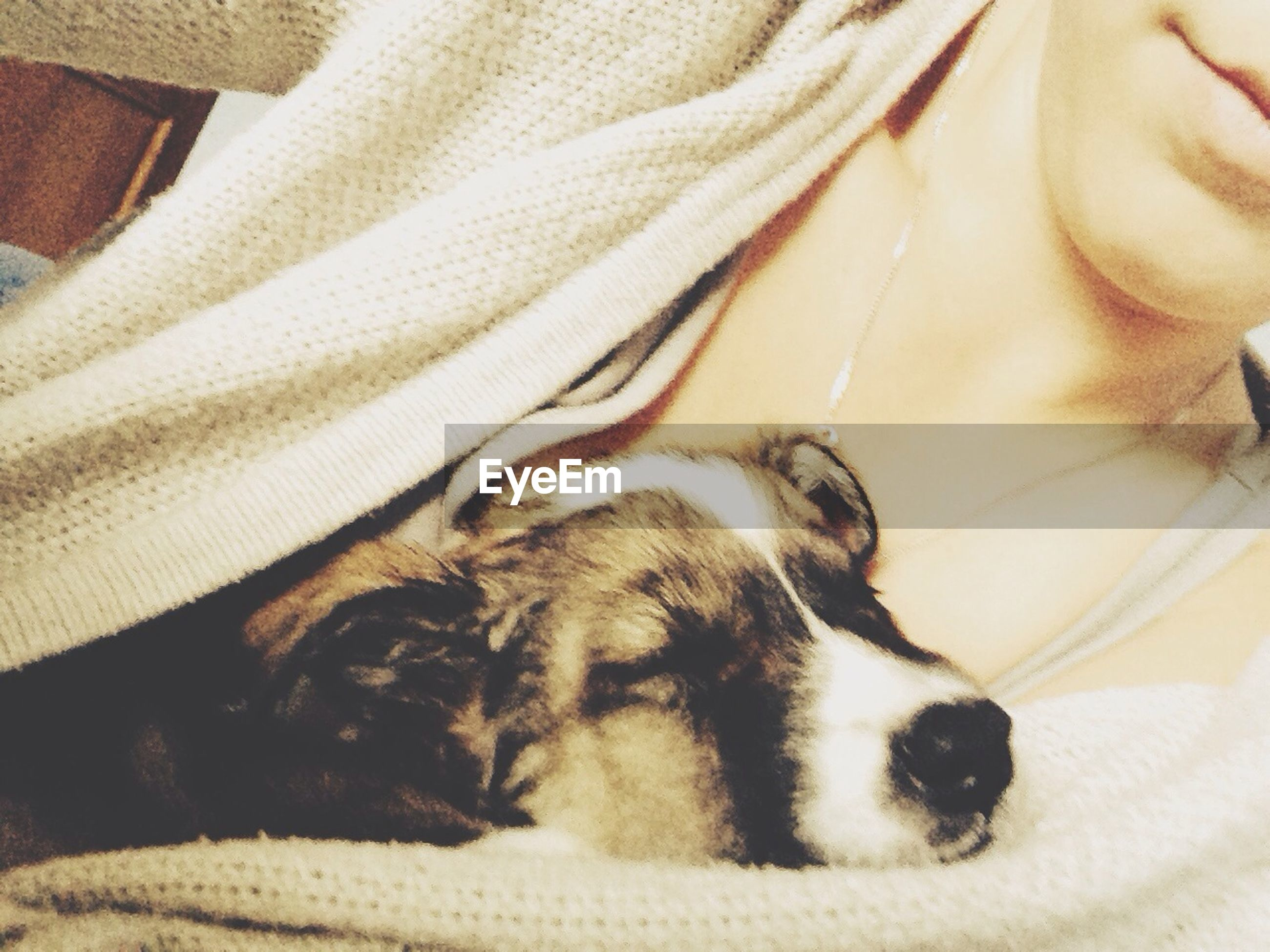 indoors, pets, domestic animals, animal themes, one animal, mammal, bed, relaxation, sleeping, close-up, dog, resting, home interior, lying down, domestic cat, blanket, cat, one person, high angle view, part of