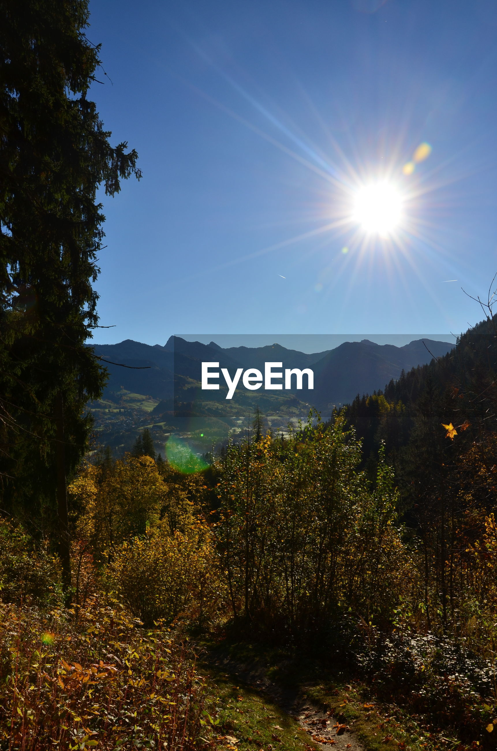 SCENIC VIEW OF FOREST AGAINST MOUNTAINS