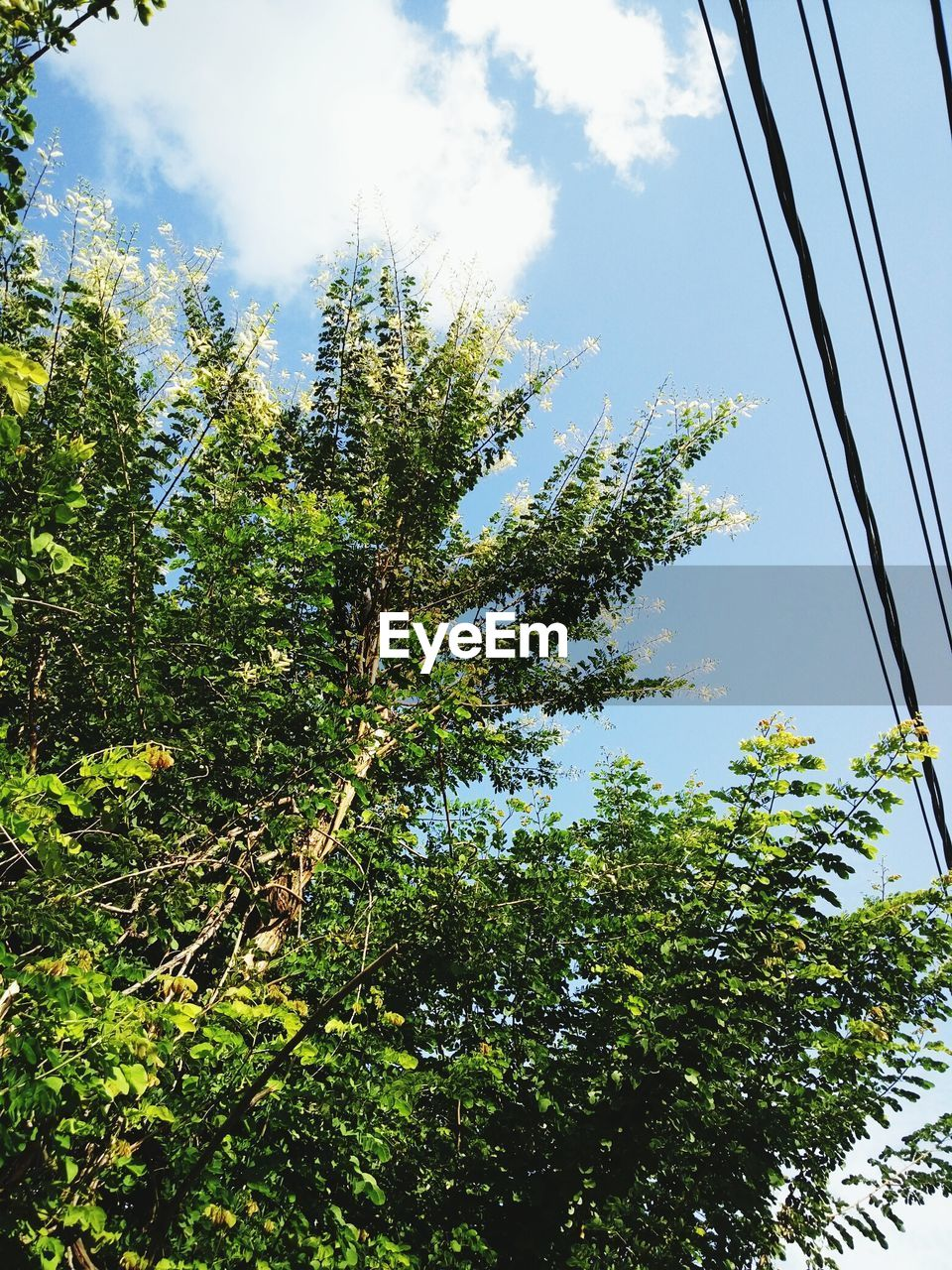 tree, low angle view, sky, growth, nature, no people, day, outdoors, beauty in nature, blue sky