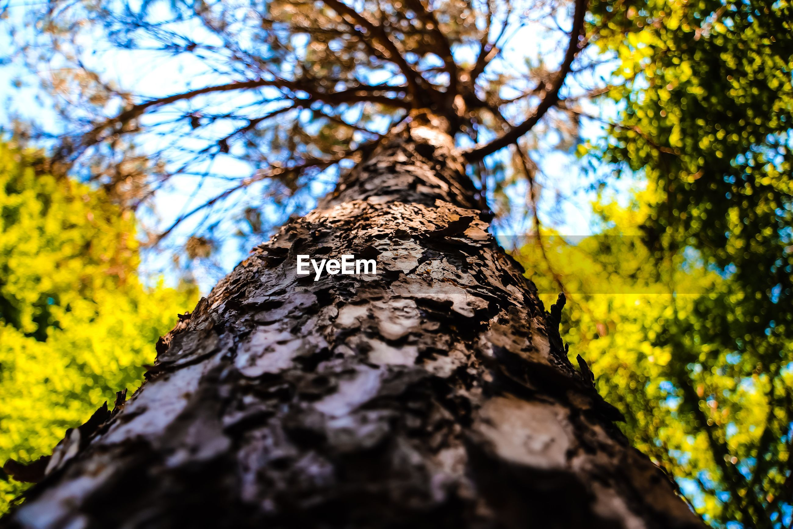 Close-up low angle view of tree trunk in forest
