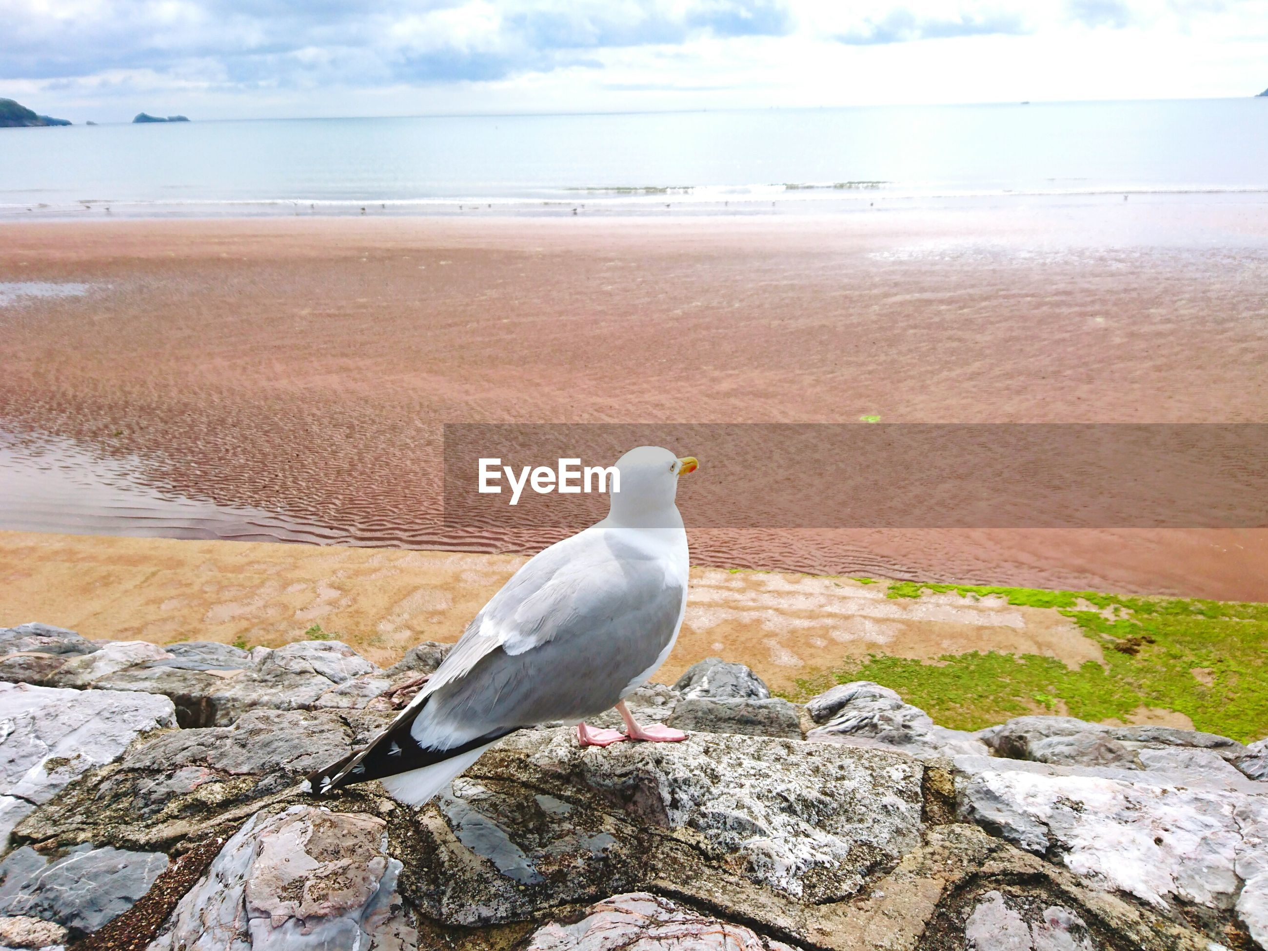 Seagull perching on rock at beach against sky
