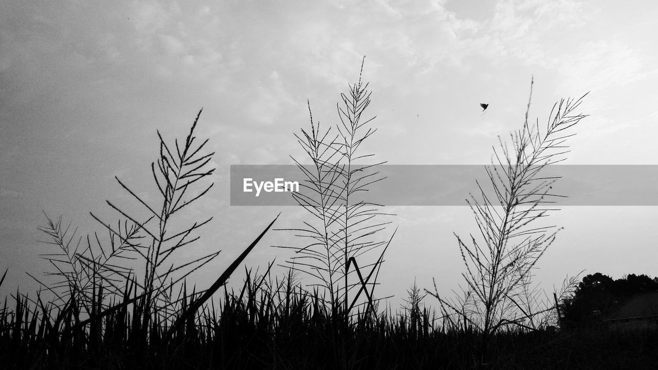 sky, plant, cloud - sky, silhouette, beauty in nature, growth, tranquility, nature, no people, tranquil scene, tree, scenics - nature, day, non-urban scene, field, outdoors, focus on foreground, land, low angle view, landscape, stalk