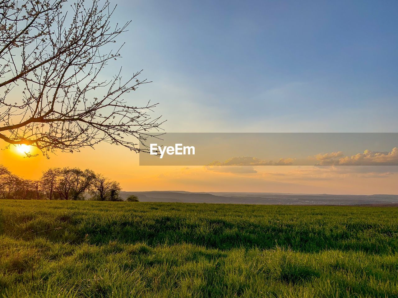 sky, scenics - nature, beauty in nature, plant, tranquil scene, tranquility, landscape, sunset, environment, field, growth, grass, land, cloud - sky, non-urban scene, tree, nature, green color, no people, horizon, sun, outdoors