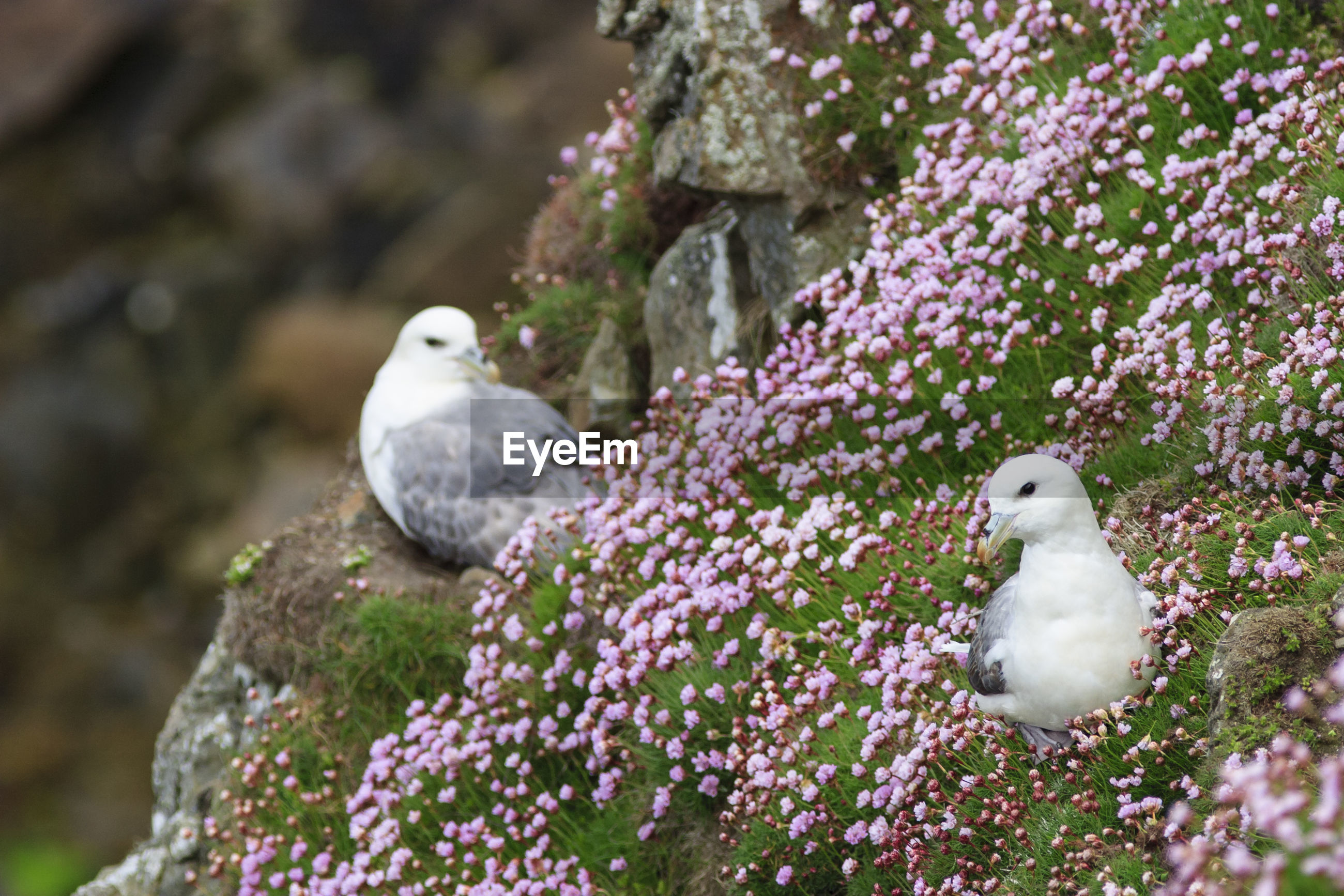 CLOSE-UP OF BIRD PERCHING ON FLOWERS