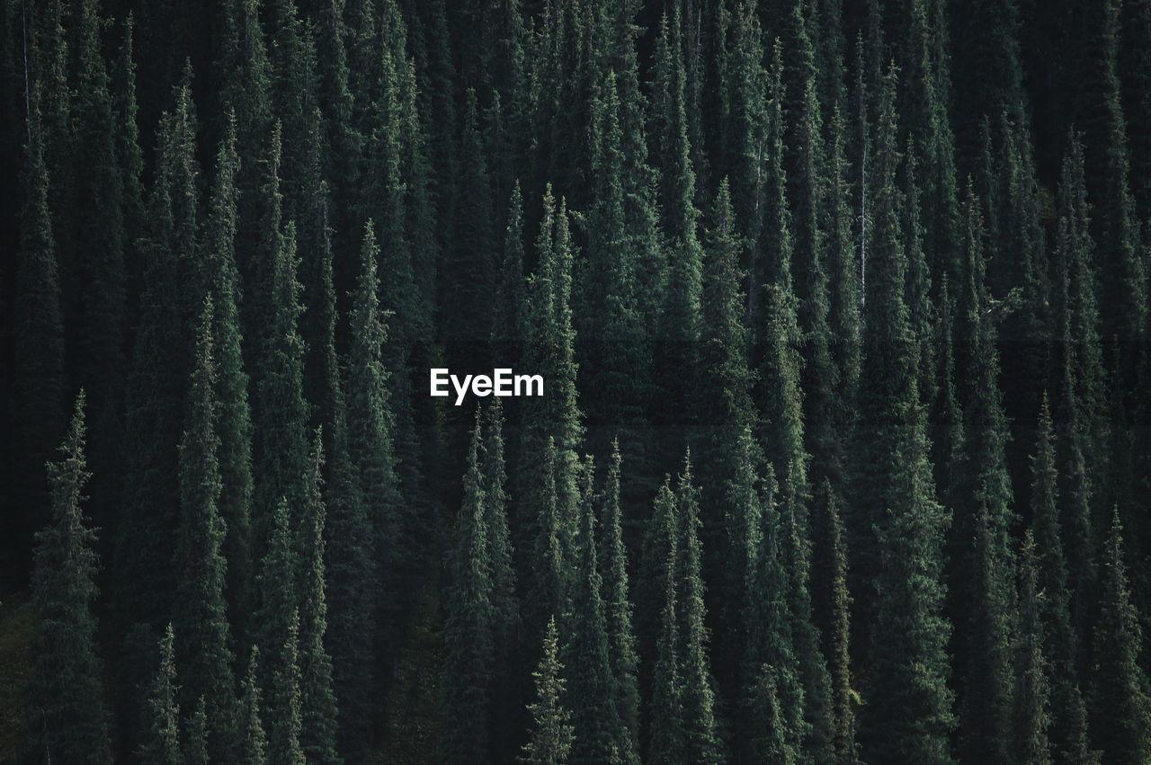 Full Frame Shot Of Lush Trees In The Forest