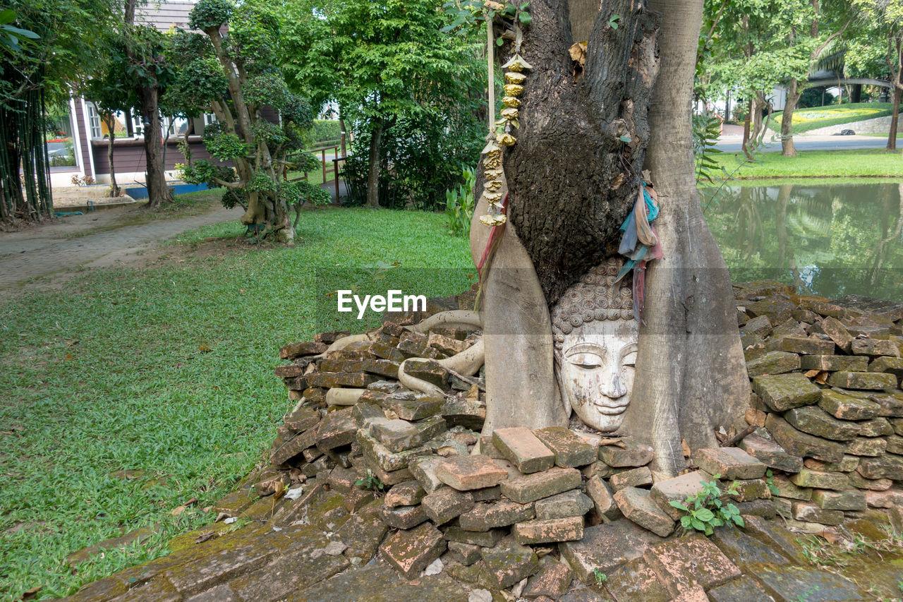tree, tree trunk, outdoors, day, built structure, grass, growth, building exterior, no people, architecture, nature, palm tree, city
