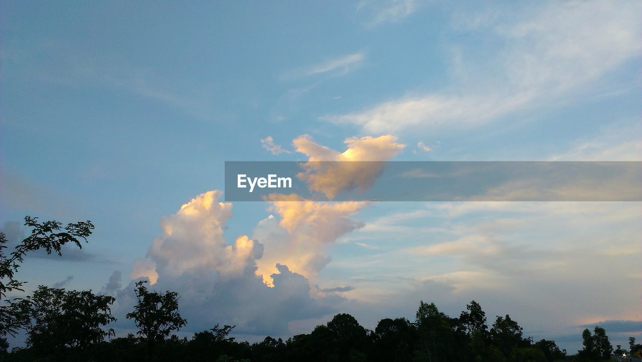 LOW ANGLE VIEW OF SKY AND TREES AGAINST CLOUDY BLUE