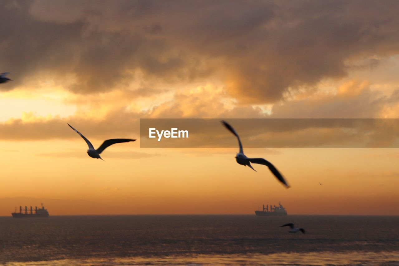 sunset, sky, cloud - sky, bird, water, animals in the wild, flying, animal wildlife, vertebrate, animal, sea, animal themes, scenics - nature, beauty in nature, silhouette, orange color, horizon, horizon over water, group of animals, no people, outdoors, seagull