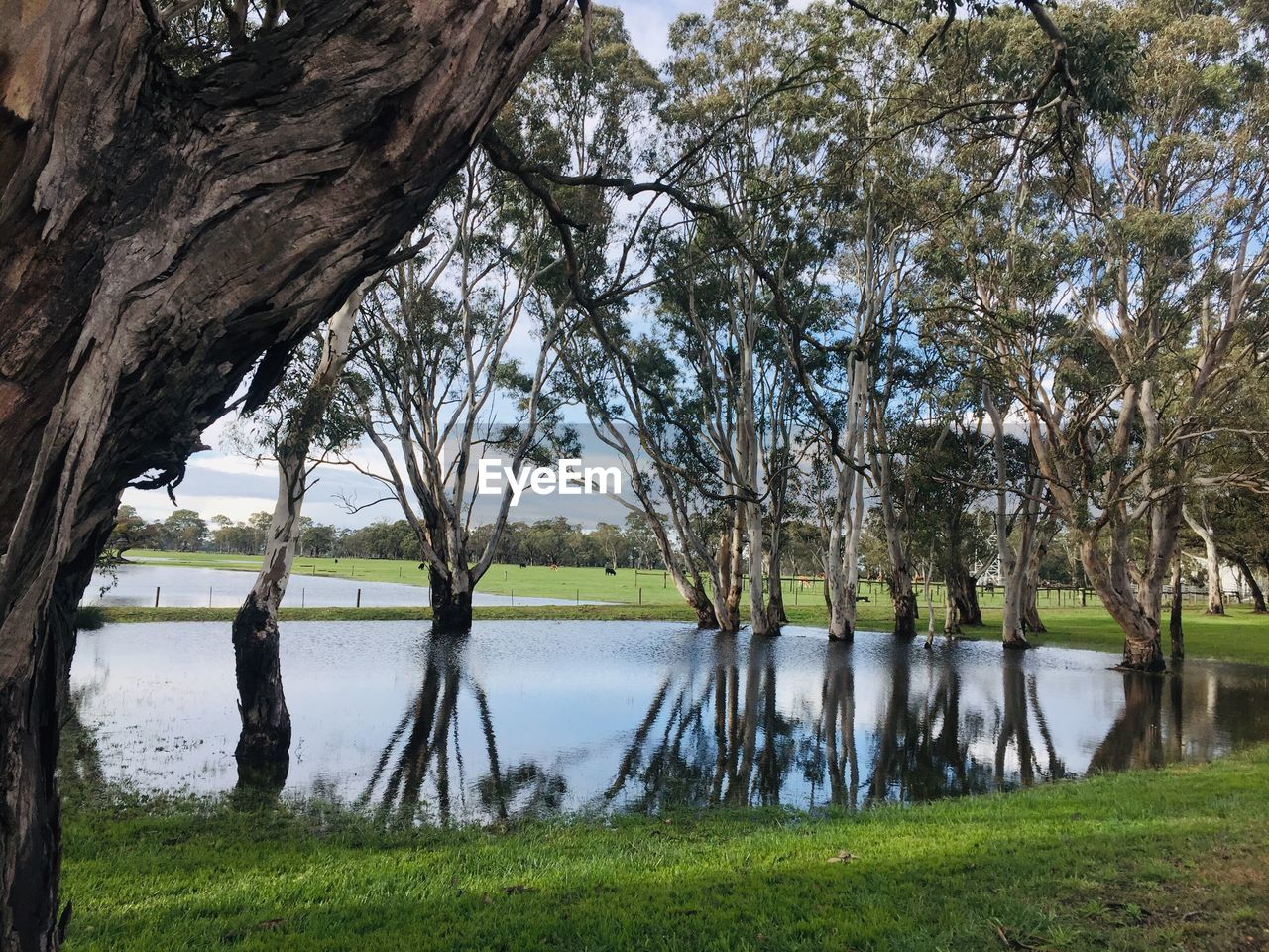 tree, plant, water, lake, tranquility, grass, nature, tranquil scene, scenics - nature, beauty in nature, day, reflection, trunk, tree trunk, growth, land, sky, no people, outdoors