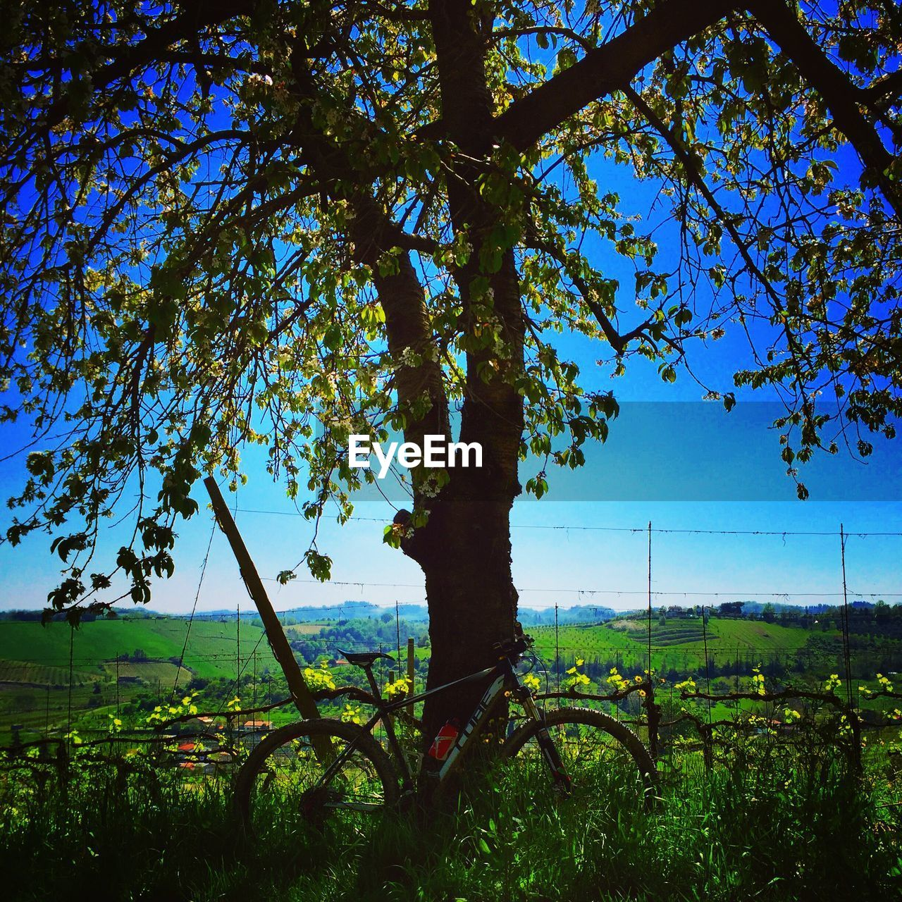 tree, growth, beauty in nature, nature, scenics, tranquil scene, tranquility, day, field, no people, outdoors, landscape, branch, plant, sky, blue, grass, water, rural scene, clear sky, flower