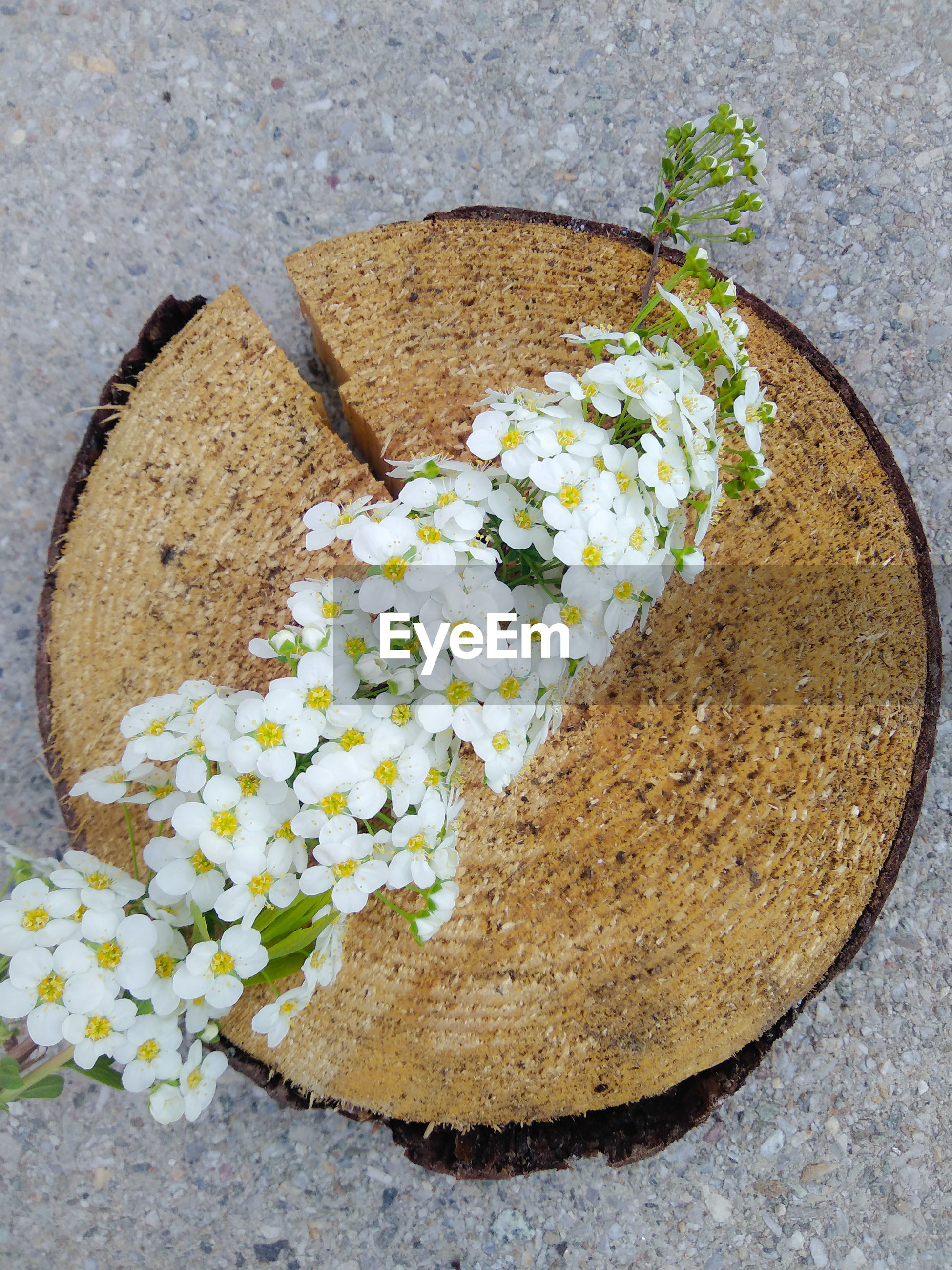 High angle view of flowering plant on rock