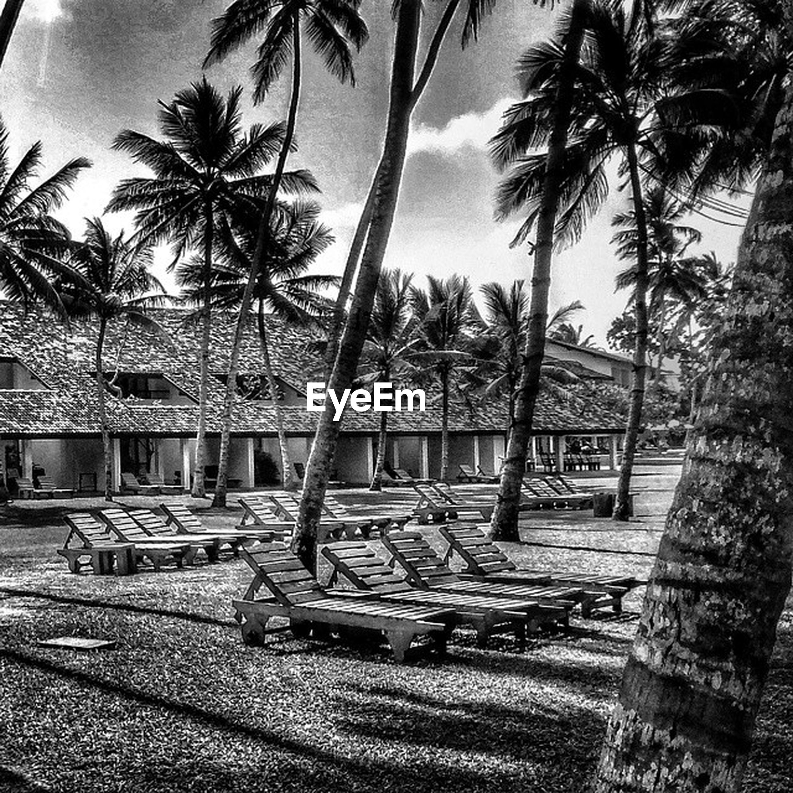 tree, palm tree, built structure, architecture, building exterior, tree trunk, sky, growth, chair, branch, day, nature, sunlight, shadow, absence, bench, park - man made space, outdoors, tranquility, house