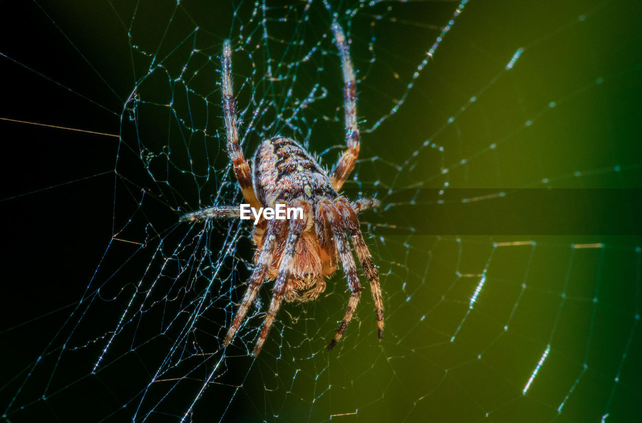 animal themes, animal, one animal, spider web, animal wildlife, arachnid, animals in the wild, invertebrate, spider, arthropod, insect, fragility, close-up, zoology, nature, no people, vulnerability, animal body part, focus on foreground, day, outdoors, web, animal leg, complexity, marine