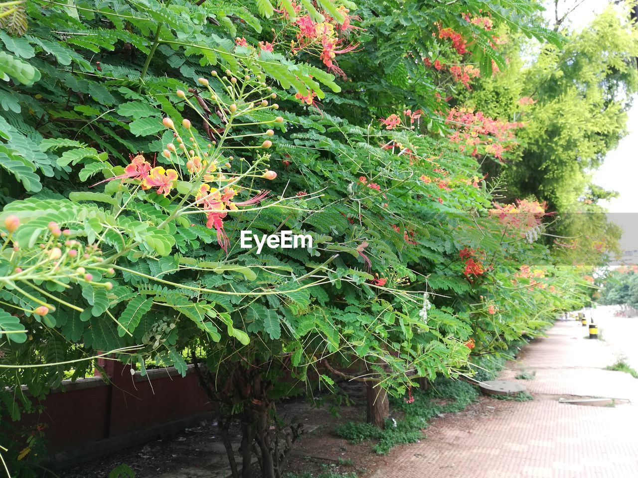 plant, growth, nature, green color, leaf, plant part, day, beauty in nature, footpath, no people, outdoors, tree, freshness, tranquility, flower, flowering plant, sunlight, red, direction, garden