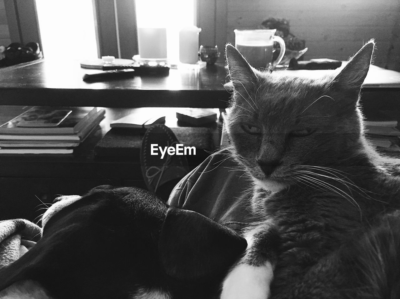 mammal, animal themes, animal, cat, feline, domestic cat, pets, domestic animals, domestic, vertebrate, one animal, indoors, relaxation, home interior, no people, resting, lying down, whisker, animal head