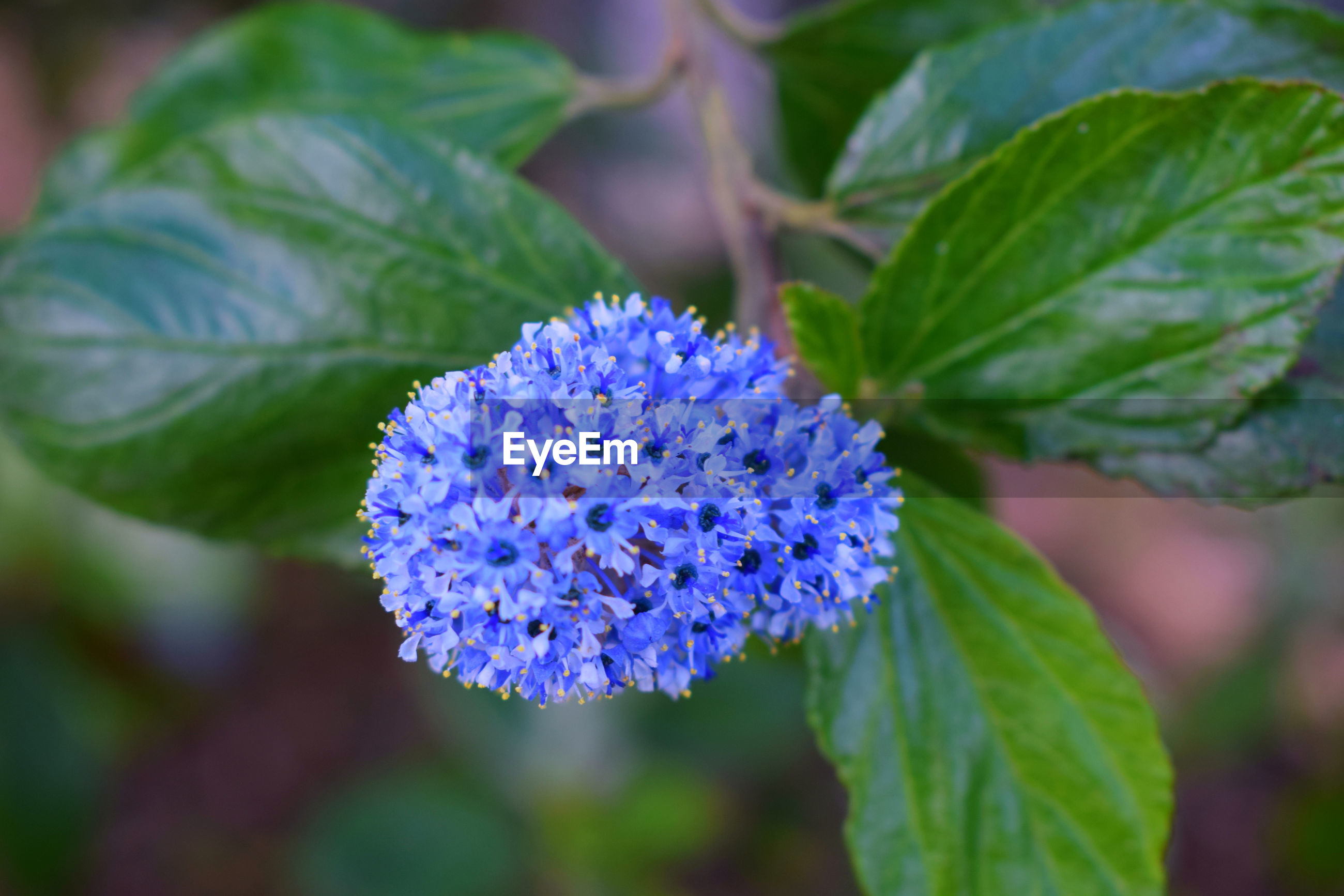 flower, growth, beauty in nature, freshness, nature, leaf, purple, petal, fragility, plant, green color, day, outdoors, flower head, no people, focus on foreground, close-up, blue, blooming