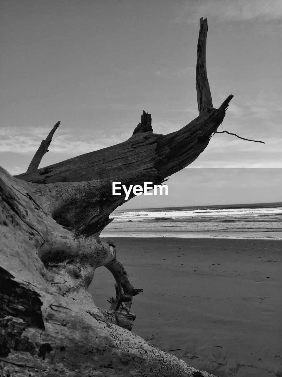 Cropped Image Of Driftwood At Beach Against Sky
