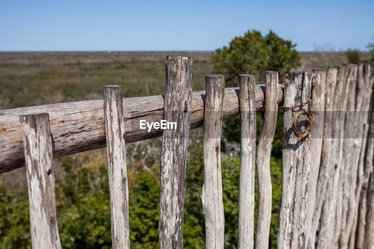wood - material, outdoors, no people, focus on foreground, day, nature, close-up, wooden post, tree, grass, mammal
