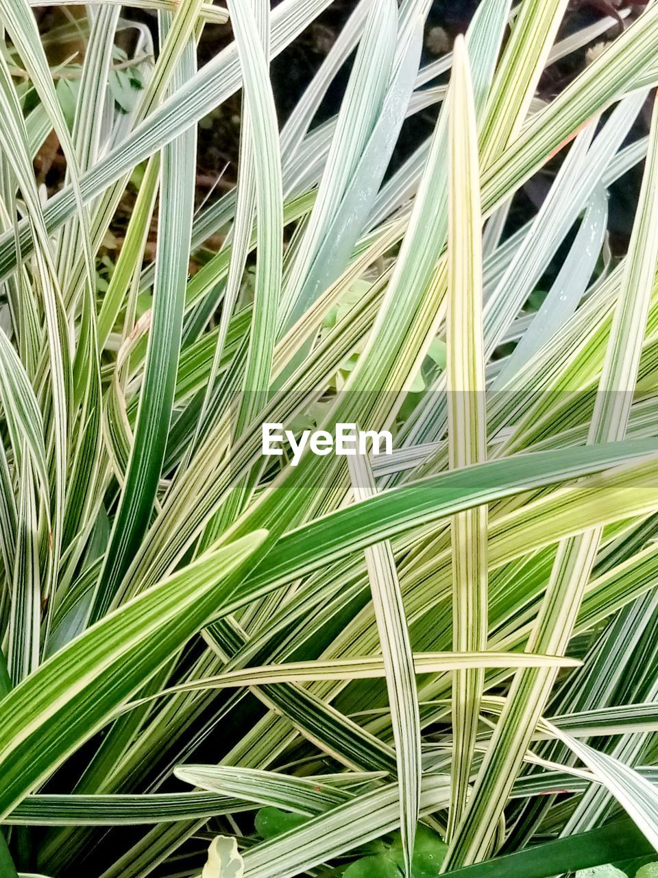 green color, full frame, backgrounds, plant, growth, close-up, leaf, beauty in nature, no people, nature, grass, plant part, day, palm leaf, outdoors, palm tree, textured, pattern, blade of grass, tree, leaves