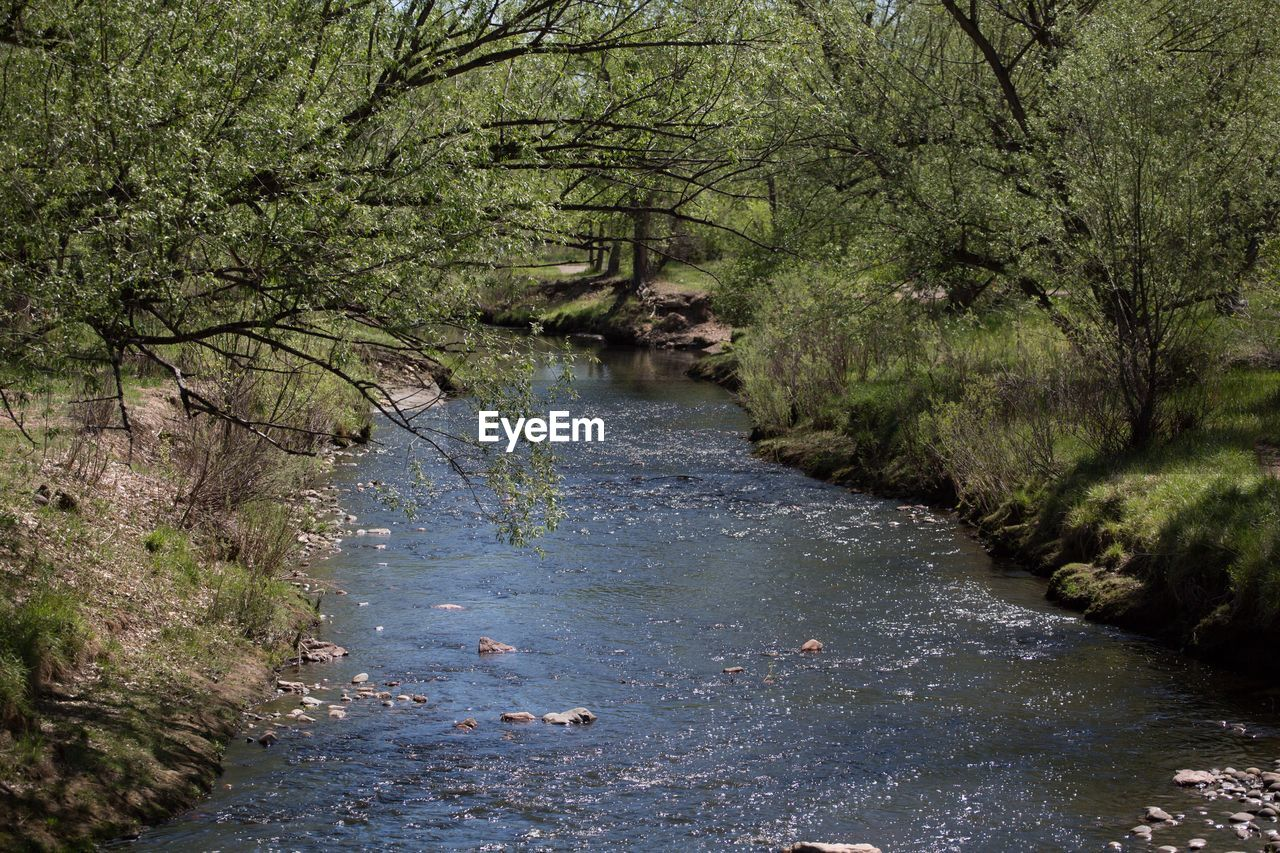 nature, river, water, tree, no people, tranquility, day, forest, outdoors, scenics, growth, landscape, beauty in nature