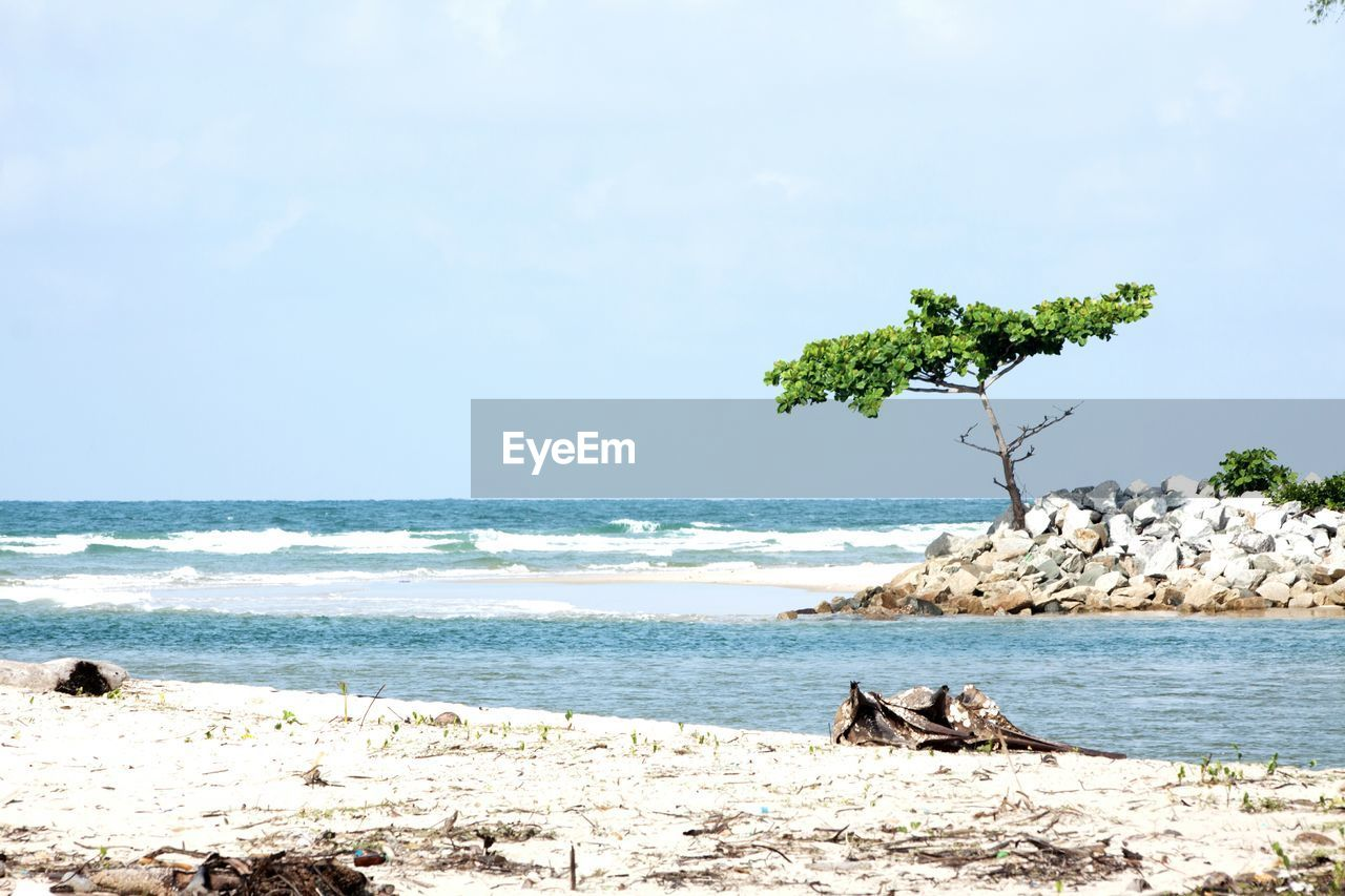 Tree and rocks amidst sea against sky