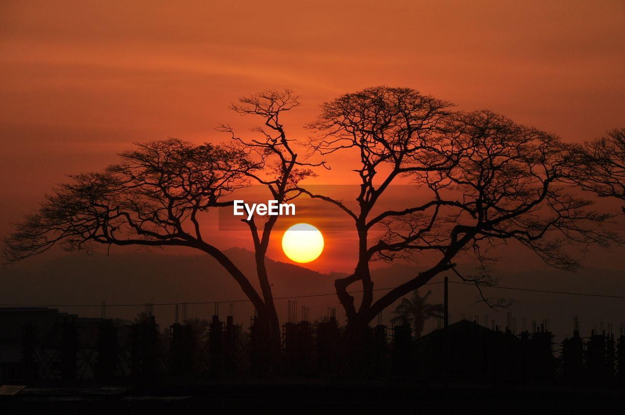 Silhouette Tree Against Orange Sky