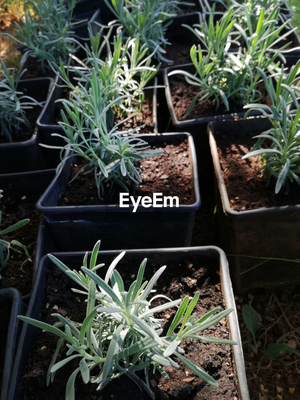 growth, plant, planting, potted plant, seedling, leaf, nature, gardening, new life, green color, agriculture, sapling, outdoors, day, freshness, plant nursery, beauty in nature, close-up, greenhouse, no people