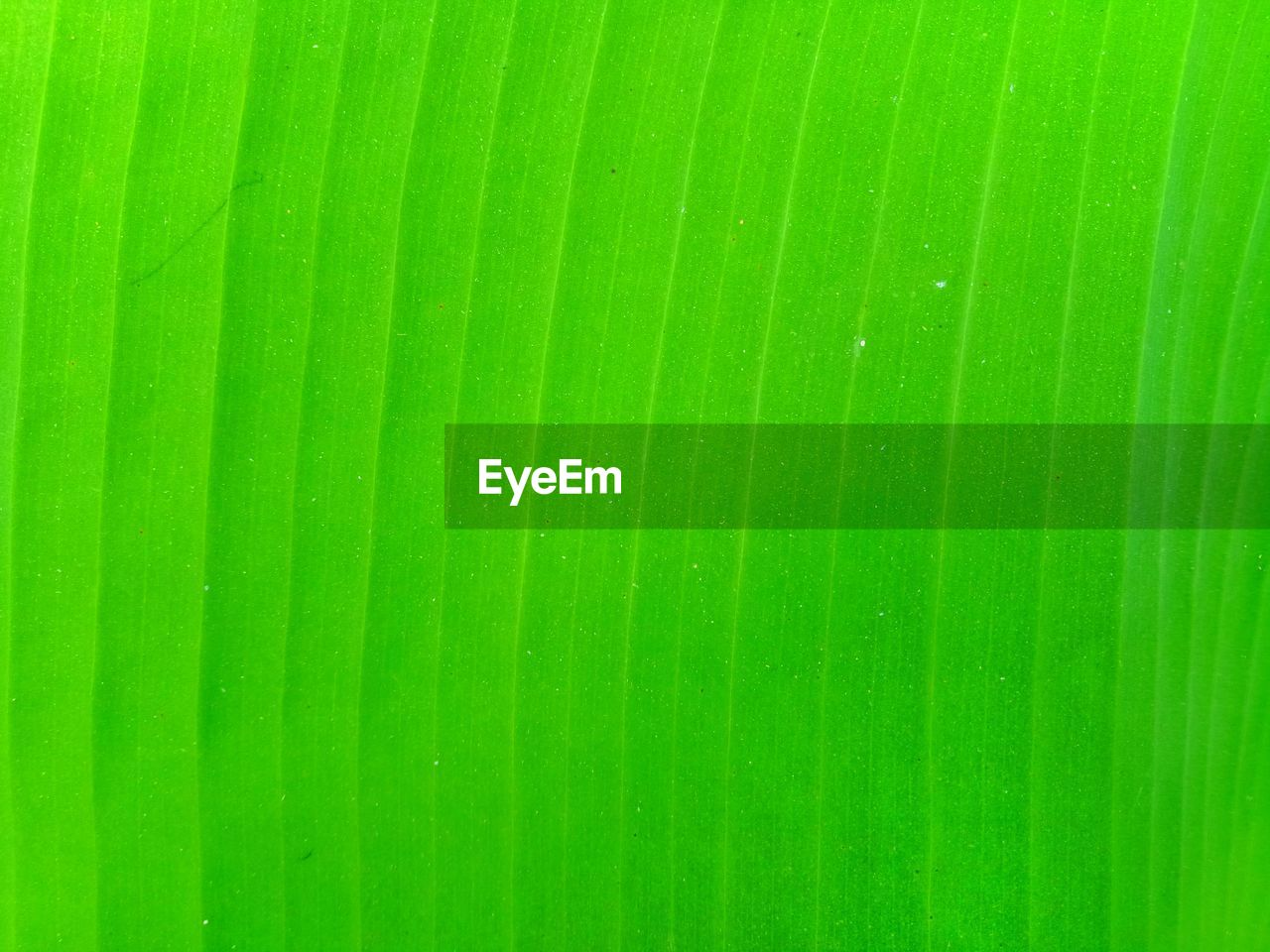 green color, full frame, backgrounds, pattern, no people, close-up, leaf, nature, banana leaf, textured, natural pattern, plant part, growth, beauty in nature, day, outdoors, repetition, leaves, plant, freshness, palm leaf