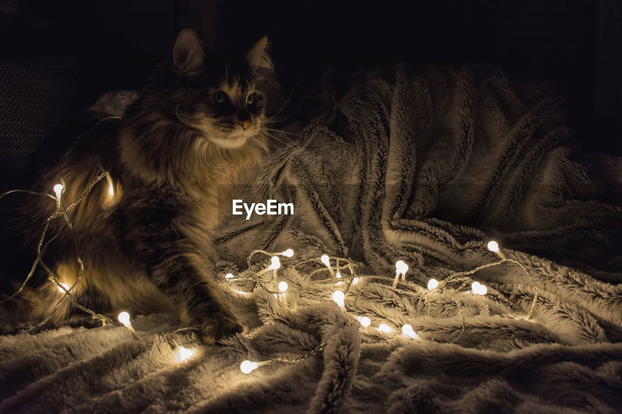 Cat With Illuminated Lights Sitting On Bed At Home