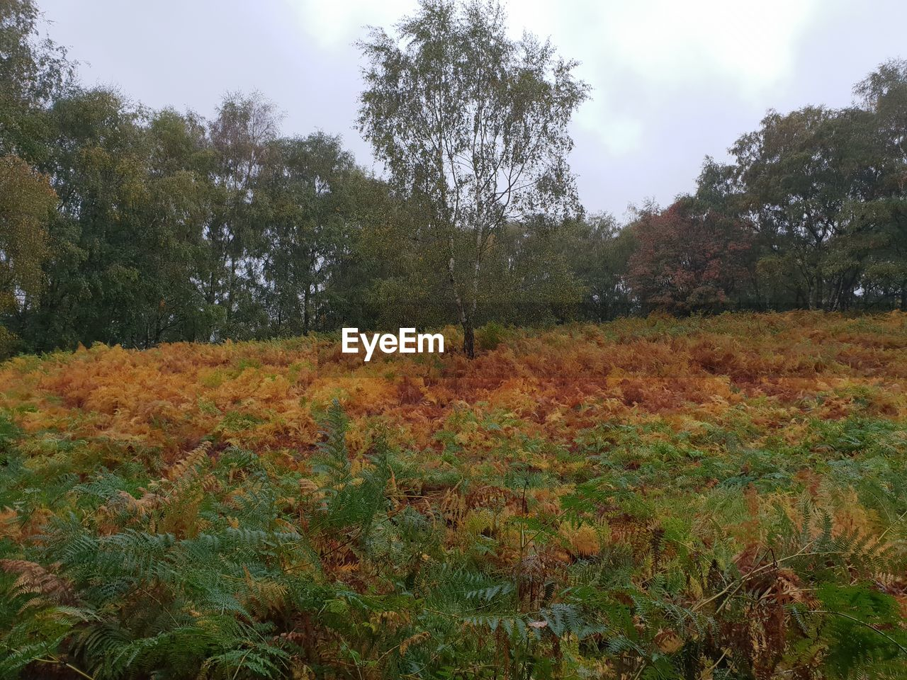 plant, land, sky, beauty in nature, nature, growth, tranquility, tree, field, landscape, environment, no people, autumn, tranquil scene, day, outdoors, leaf, plant part, scenics - nature, change, leaves