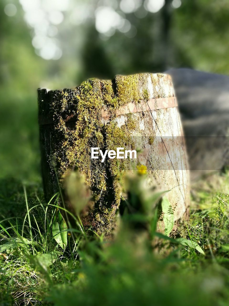 nature, selective focus, tree stump, day, outdoors, moss, no people, close-up, log, wood - material, beauty in nature, grass, axe
