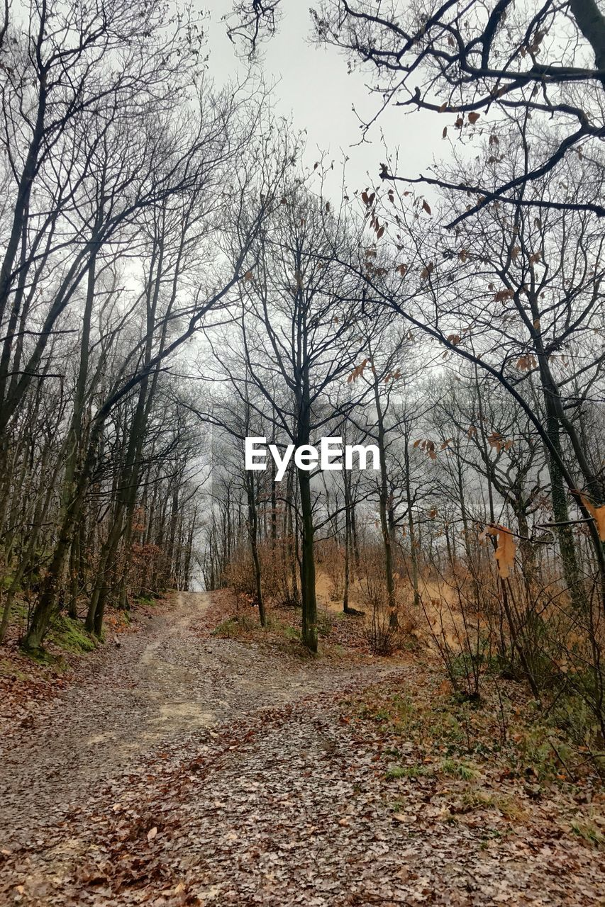 tree, plant, forest, land, tranquility, direction, nature, the way forward, tranquil scene, autumn, non-urban scene, day, no people, footpath, sky, scenics - nature, bare tree, growth, beauty in nature, woodland, outdoors, change, diminishing perspective