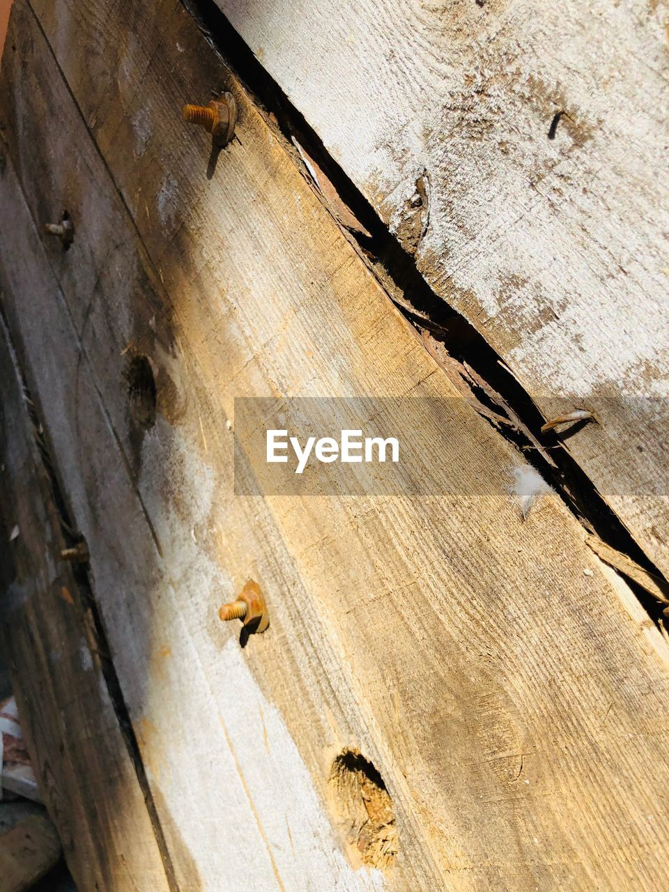 wood - material, low angle view, no people, animal wildlife, animals in the wild, close-up, textured, day, invertebrate, insect, animal, sunlight, nature, animal themes, group of animals, outdoors, tree, wood, pattern