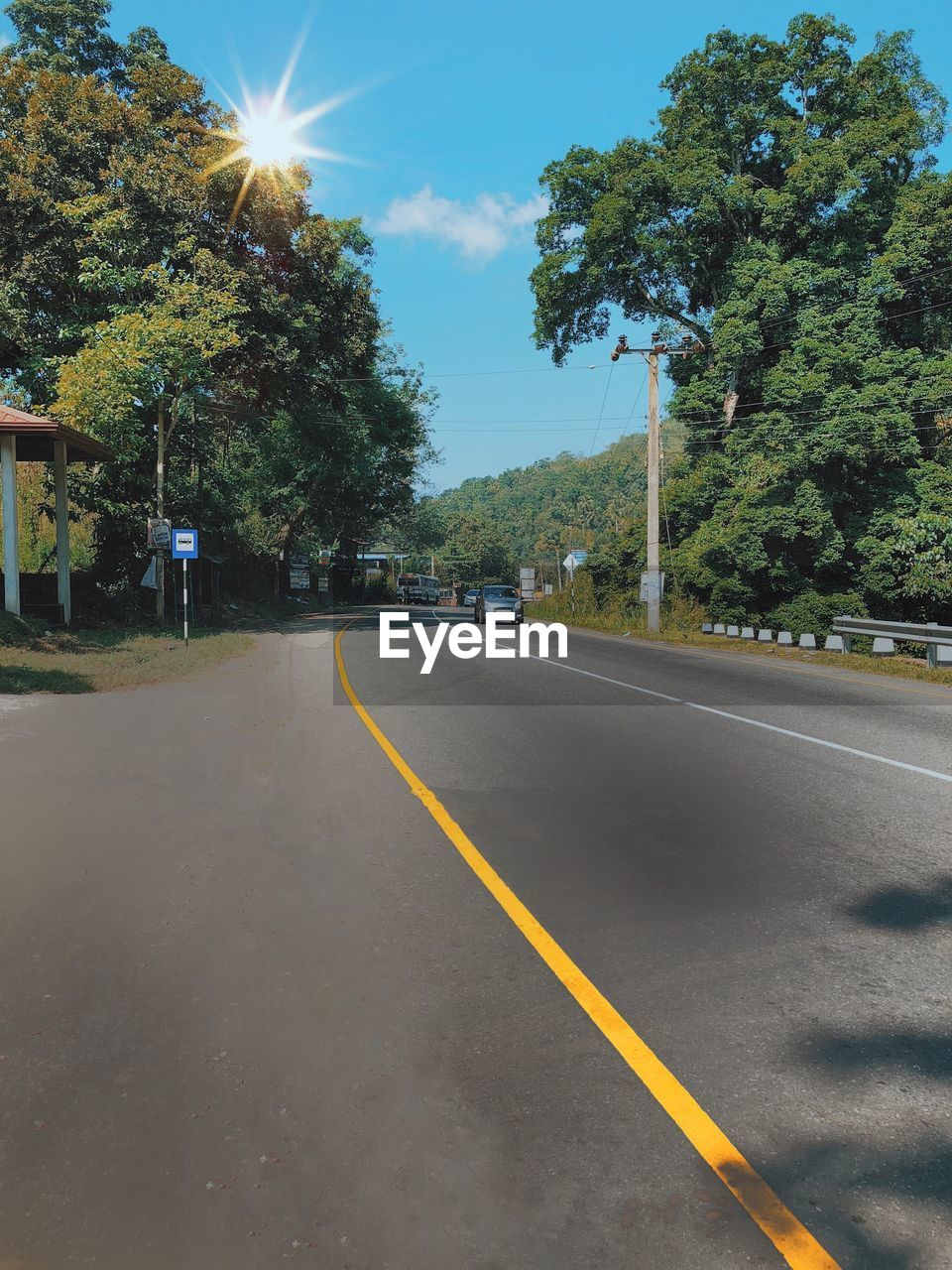 tree, road, plant, transportation, symbol, sign, road marking, the way forward, sky, marking, sunlight, direction, nature, no people, day, street, double yellow line, growth, diminishing perspective, asphalt, outdoors, dividing line, long