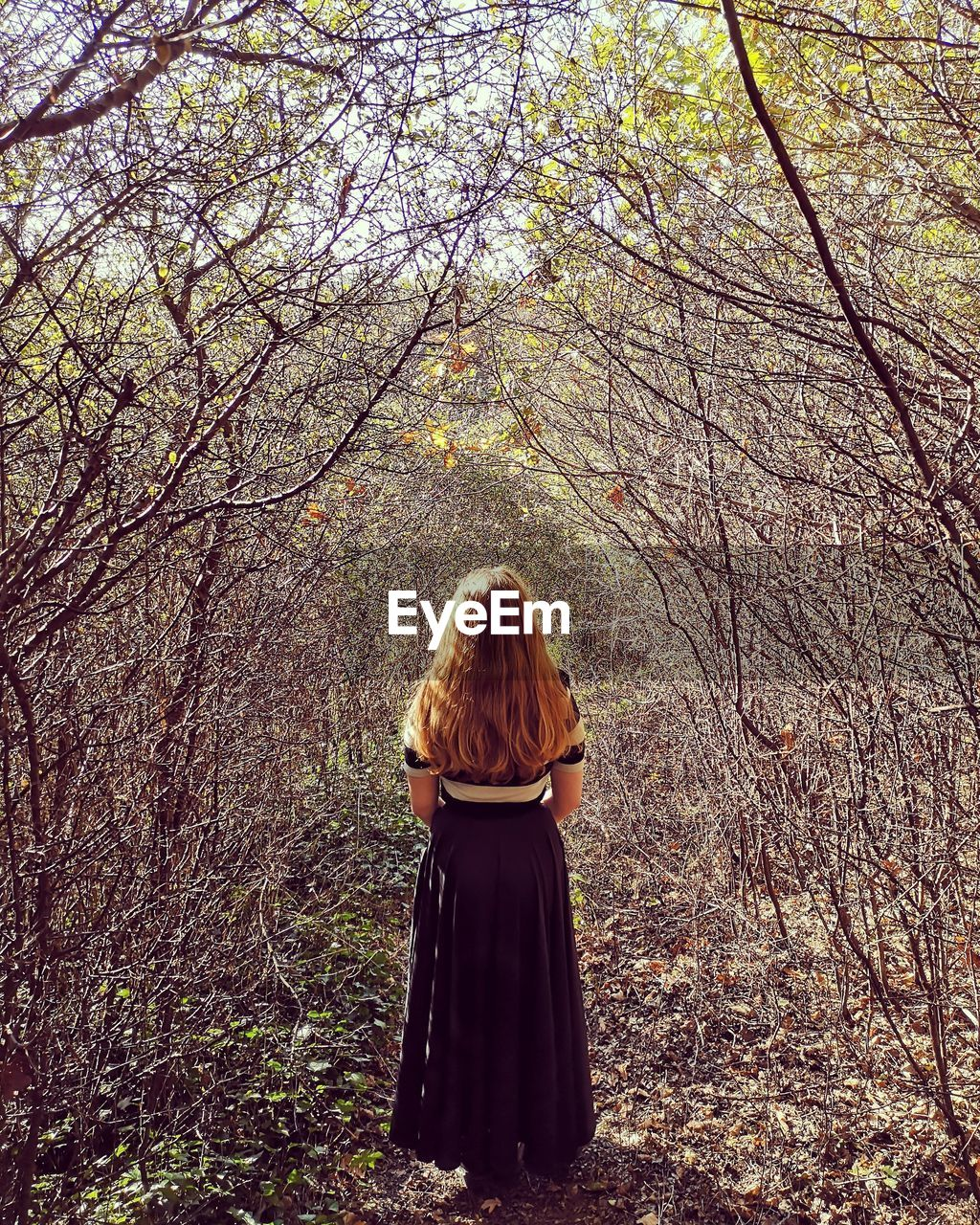 tree, one person, plant, rear view, real people, leisure activity, lifestyles, hairstyle, forest, hair, women, standing, land, nature, adult, long hair, day, growth, branch, outdoors, woodland