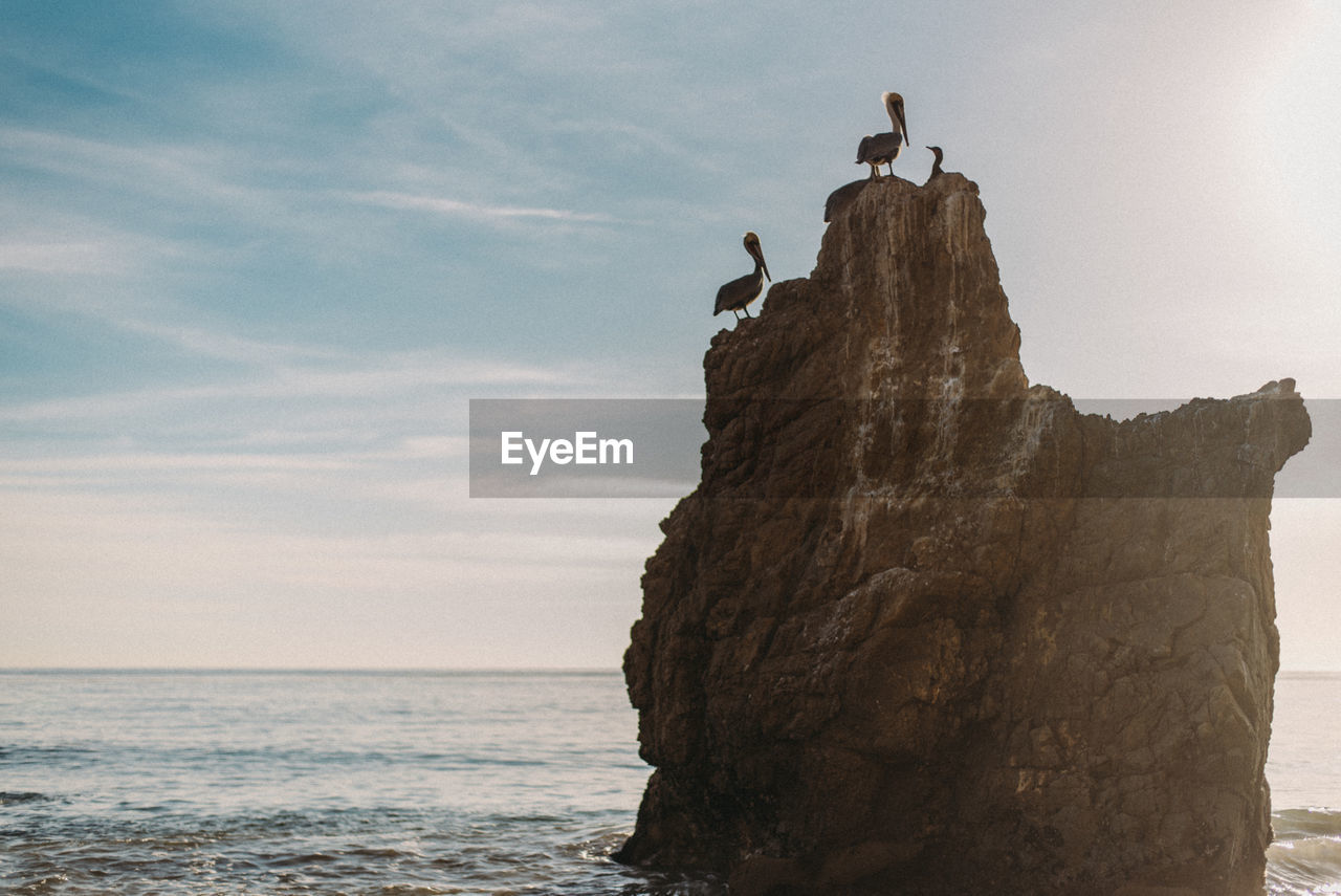 Low Angle View Of Pelicans On Rock Formation In Sea